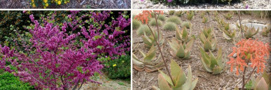 15 Drought Tolerant Plants for SoCal Landscapes